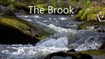 The Brook !